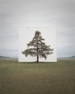 Myoung Ho Lee - tree 6-2014